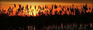 Turraun Wetlands Sunset Panorama by Philomena Jordan